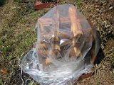 torii2007_0909_122932AA_160.jpg