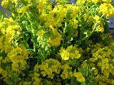 wada2007_0114CX_160.jpg