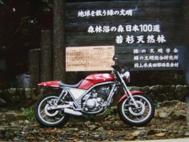 P1011132.jpg