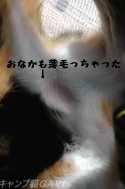 081113GaviHara_9692.jpg