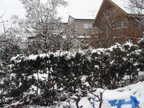 11雪景色06
