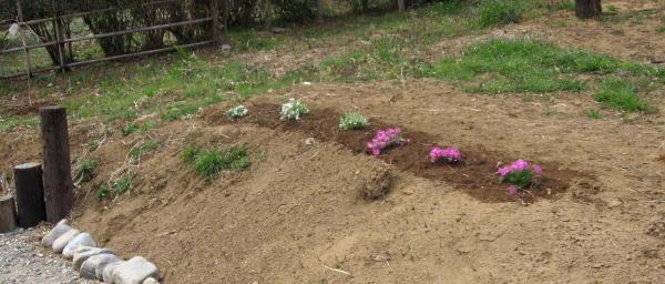 54花を植える08