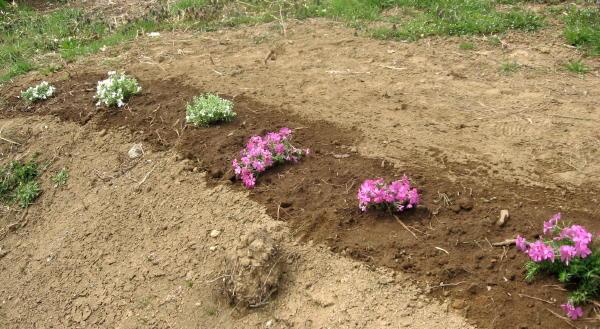54花を植える09