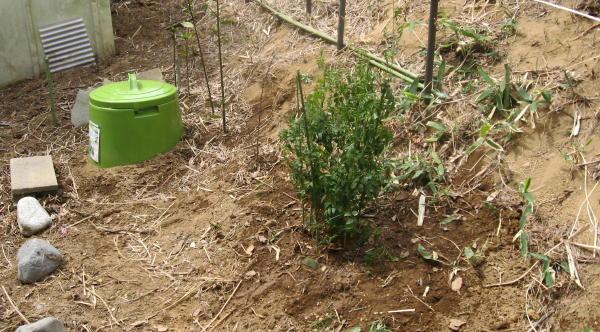 55木を植える02