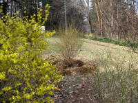 55木を植える03