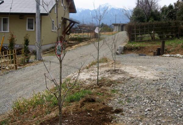 55木を植える04a