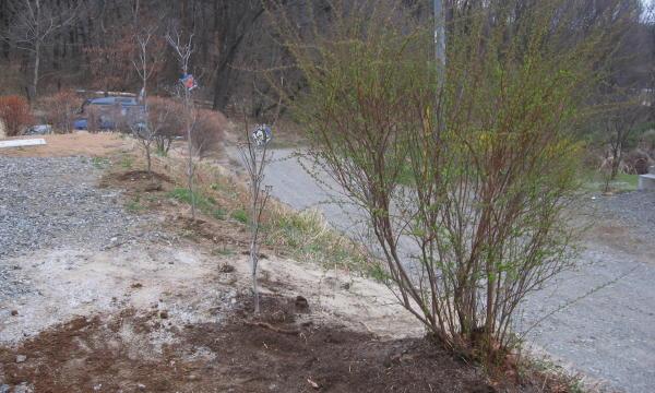55木を植える05