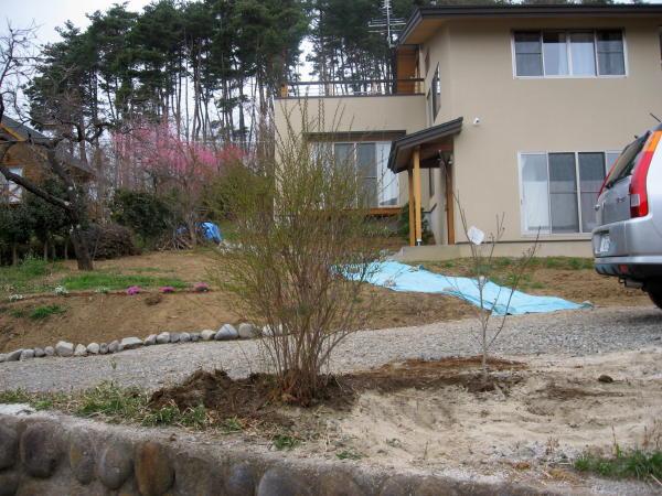 55木を植える06