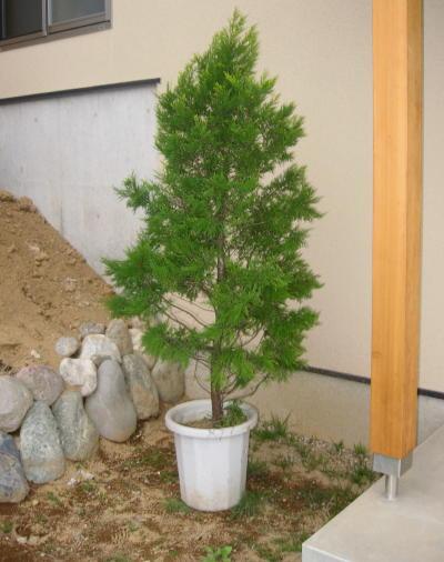 55木を植える07
