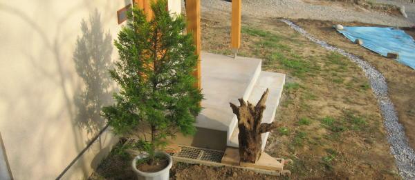 55木を植える11