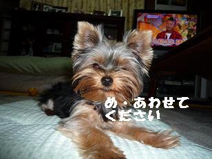 2008_10209・16デジカメ0021