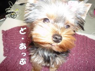 コピー ~ 2008_10289・16デジカメ0037