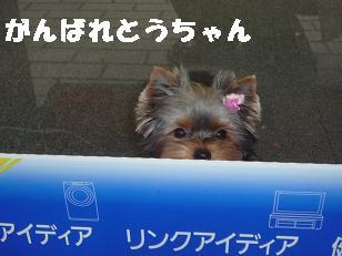 コピー ~ 2008_11039・16デジカメ0088
