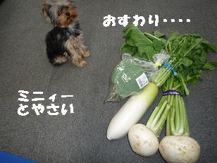 2008_11089・16デジカメ0050