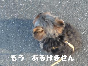 2008_11129・16デジカメ0042
