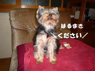 コピー ~ 2008_10279・16デジカメ0054
