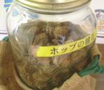 ホップ毬花