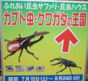カブト虫・クワガタの王国