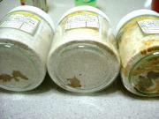 菌糸状態2