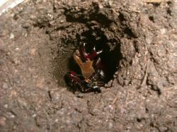 カブカブJr蛹室