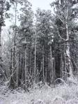 白神の森・冬01