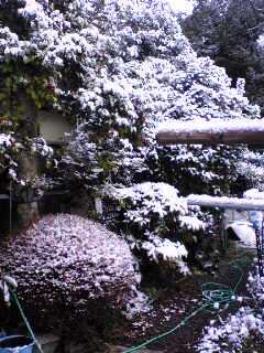 雪景色 in パパの実家