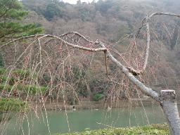 保津川を望む
