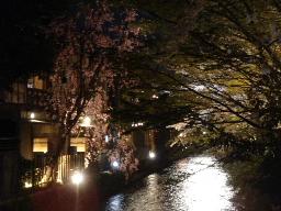 白川の夜桜1