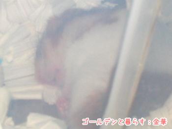 ha080122-ki1.jpg