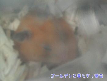 ha080127-ca3.jpg