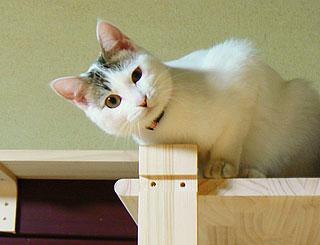 猫タワーてん