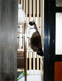猫部屋01