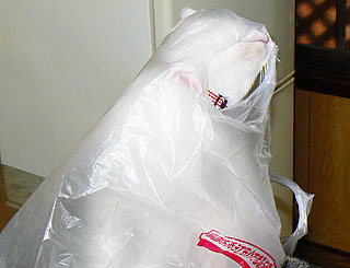 買い物袋01