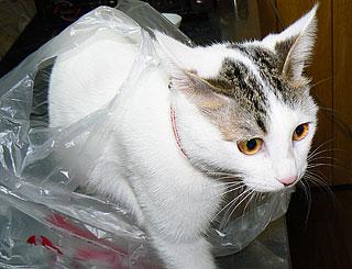 買い物袋02