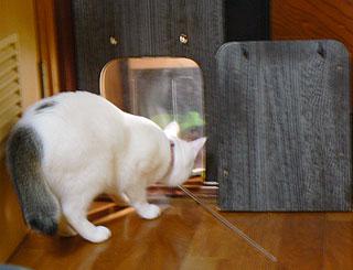 猫部屋21