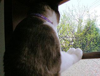 窓越し01