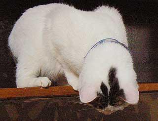 猫達の野生05