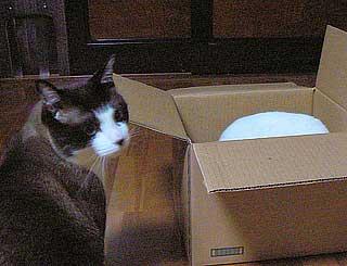 箱のサイズ001