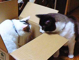 箱のサイズ002
