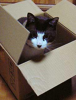 箱のサイズ004