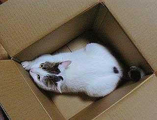 箱のサイズ005