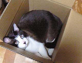 箱のサイズ006