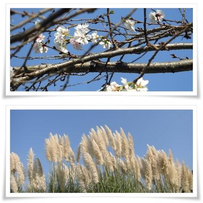 page十月桜