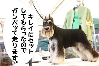 081013香川県連合ドッグショー6-s