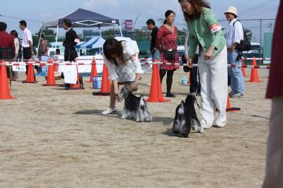 081013香川県連合ドッグショー10-s