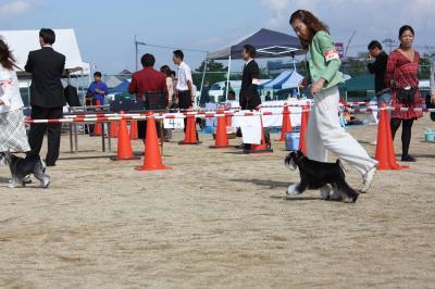 081013香川県連合ドッグショー11-s