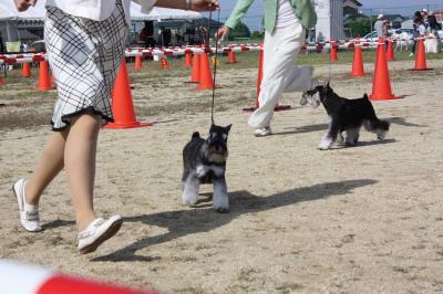 081013香川県連合ドッグショー12-s