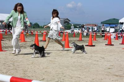 081013香川県連合ドッグショー14-s