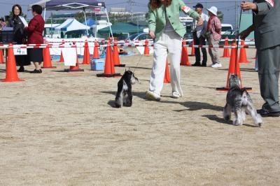 081013香川県連合ドッグショー15-s