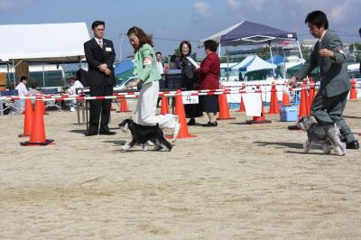 081013香川県連合ドッグショー16-s
